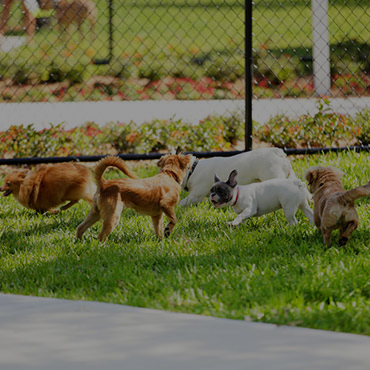 Large Dog Park at The Edge @ 401 Apartments